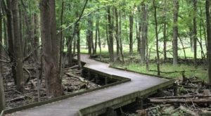 This Beautiful Boardwalk Trail In Ohio Is The Most Unique Hike Around
