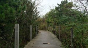 This Beautiful Boardwalk Trail In Minnesota Is The Most Unique Hike Around
