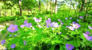 This Easy Wildflower Hike In Missouri Will Transport You Into A Sea Of Color