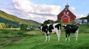 Few People Know You Can Spend The Night At This Gorgeous Working Farm In Vermont