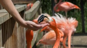 Most People Don't Know This North Carolina Zoo And Adventure Park Even Exists