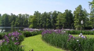 The Blooming Flower Walk In South Carolina That Will Positively Enchant You