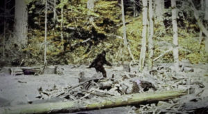 There's A Bigfoot Festival Happening In Texas And You'll Absolutely Want To Go