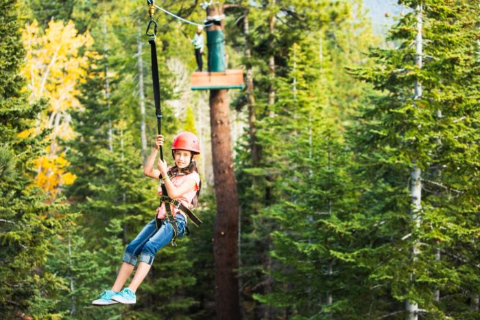 7 Amazing Treetop Adventures You Can Only Have In Northern
