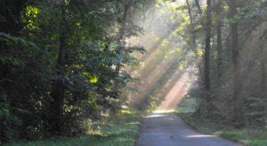 The Haunted Hike In Tennessee Will Send You Running For The Hills