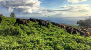 You'll Never Run Out Of Things To Do At This Remarkable Ranch Hiding In Hawaii
