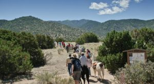 Go Llama Hiking Through The Forest On This Unforgettable New Mexico Adventure
