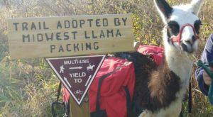 Go Llama Hiking Through The Forest On This Unforgettable Wisconsin Adventure