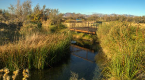 The World's Rarest Fish Can Be Found Right Here In Nevada And You'll  Want To Find It