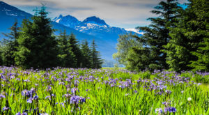 A Trip To Alaska's Neverending Wildflower Field Will Make Your Spring Complete