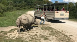 8 Once-In-A-Lifetime Animal Encounters You Can Have Right Here Around Cincinnati