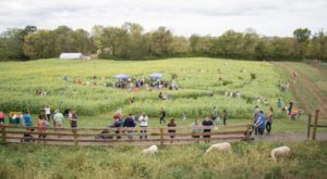 The Charming Farm In The Heart Of Cincinnati That Everyone Can Enjoy