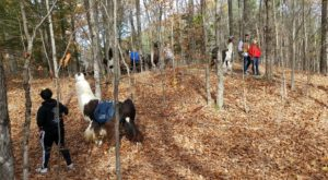 Go Llama Hiking Through The Forest On This Unforgettable New York Adventure