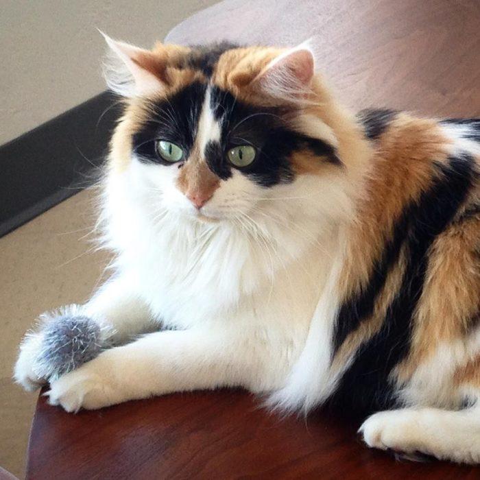 Tinker S Cat Cafe