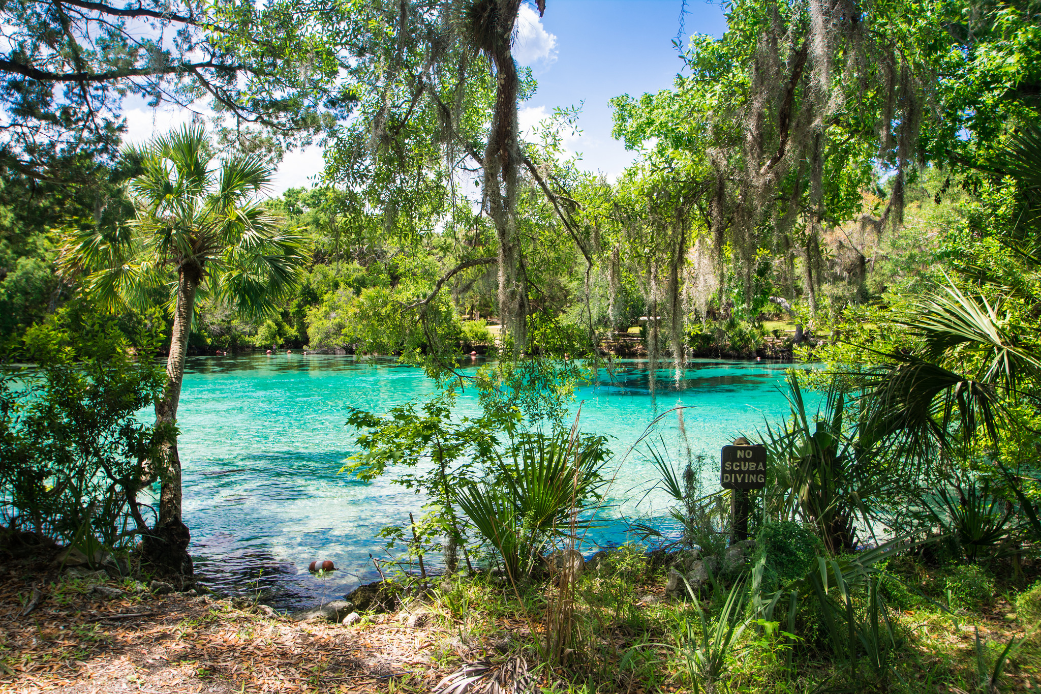 silver glen springs is the perfect natural swimming hole