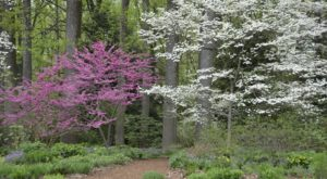 This Easy Wildflower Hike In Delaware Will Transport You Into A Sea Of Color