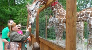 6 Once-In-A-Lifetime Animal Encounters You Can Have Right Here In Pittsburgh