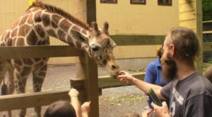 Most People Don't Know About This Underrated Zoo Hiding In Pennsylvania