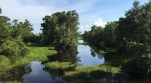 9 Low-Key Hikes In Louisiana With Amazing Payoffs
