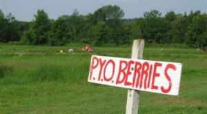 You'll Have Loads Of Fun At These 19 Pick-Your-Own Fruit Farms In Vermont