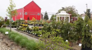10 Jaw-Dropping Flower Farms In Indiana That Will Make Your Spring Positively Enchanting