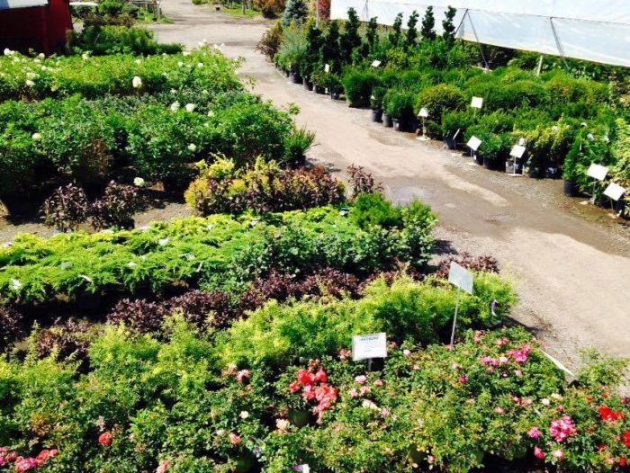flower farms in indiana that are the best plant nurseries
