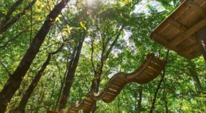 The Treetop Trail That Will Show You A Side Of Indiana You've Never Seen Before