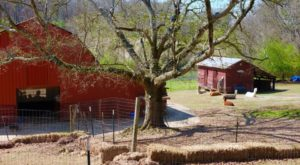 There's An Alpaca Farm In Alabama And You're Going To Love It