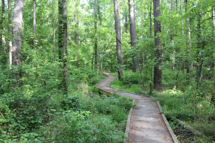 11 stunning nature preserves in georgia perfect for a for Autrey mill