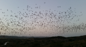 The Second-Largest Bat Population In The World Can Be Found Right Here In Texas