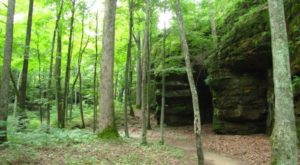 6 Deep Woods Trails In Illinois To Get Lost In This Spring