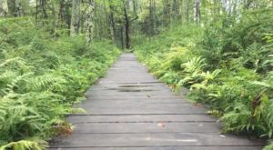 This Incredible Boardwalk Trail In Maine Is The Most Unique Hike Around