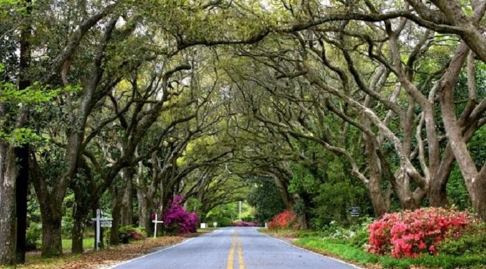 magnolia springs  best scenic drive in alabama