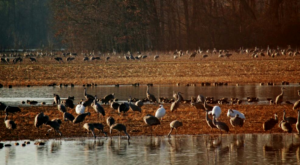 You'll Never Forget A Visit To This Expansive Alabama Wildlife Refuge