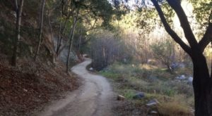 The Waterfall Trail Tucked Inside An Enchanted Forest Is One Of Southern California's Hidden Treasures