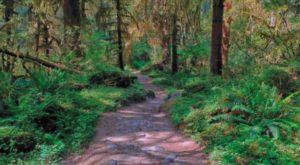 The One U.S. Hike That Feels Like You've Landed Inside A Jungle