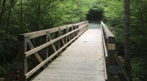There's A Boardwalk Trail Hiding In The Middle Of A Virginia Forest And You'll Want To Find It