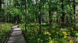 This Beautiful Boardwalk Trail In South Carolina Is The Most Unique Hike Around