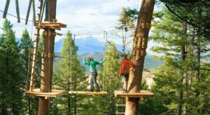 The Stomach-Dropping Canopy Walk You Can Only Find In Wyoming