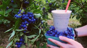 You'll Have Loads Of Fun At These 8 Pick-Your-Own Fruit Farms In Maine