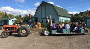 You'll Have Loads Of Fun At These 5 Pick-Your-Own Fruit Farms In Montana