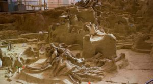 You Can Dig Up Fossils From The Ice Age At This South Dakota Attraction