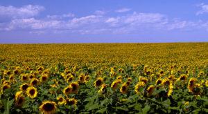 10 Reasons Why Anyone Who Hates North Dakota Can Just Shut Up