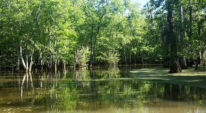The One Swamp Tour Near New Orleans That'll Transport You To Another World