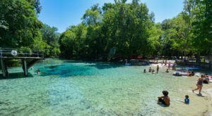 A Dip In This Crystal Clear Natural Spring In Florida Will Make Your Summer Complete