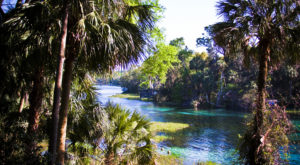 A Trip Down This Crystalline River In Florida Is All You Need For Summer And More