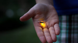 This Firefly Phenomenon In Wisconsin Will Enchant You In The Best Way Possible