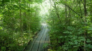This Beautiful Boardwalk Trail Near Cincinnati Is The Most Unique Hike Around