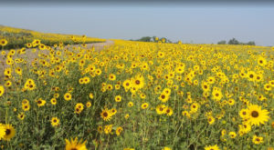 There's So Much To Love About This Gorgeous Kansas Grassland Full Of Wildflowers