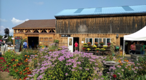 You'll Have Loads Of Fun At These 7 Pick-Your-Own Fruit Farms In New Hampshire